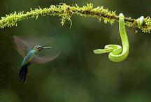 AWSOME Photographs!! / Isn't Photography Amazing!!! / by Linda Rommelaere