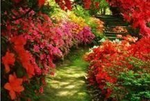 Gardens / by Janice Magee Walz