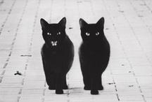 Gato Gato / In praise of the black cat / by Tara Clair Candoli