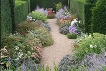 Gardens / by Carmen Gongora