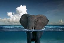 Great Elephants / by Genevieve Faciana