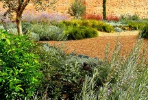 Futuro Jardim/Future Garden / by Carla Antunes