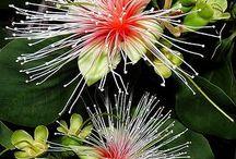 Australian & NZ Flora / Indigenous plants of Australia Indigenous plants of New Zealand / by Drina Seymour