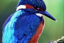 "#AIRBORN::BIRD'S::GEESE::DUCKS / by ""Rùthię Shërlöçk Whańgdöödłę/ *NNL*"