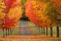 THANKFUL AUTUMN / Pumpkins, turkey, apples, cranberries . . . everything Autumn. Decorations, recipes and holiday inspiration. / by A Glover