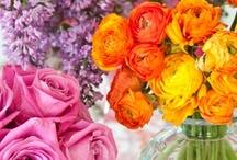 Floral Fantasy / by Emily Ruddo