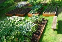 Gardening / Garden tips and ideas, DIY and instructions, as well as gorgeous garden inspiration! / by Nadene Esterhuizen
