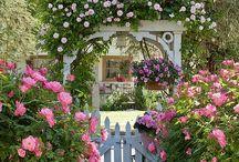 My Dream Garden  / by Regeina Savage
