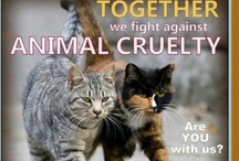 Support Animal Welfare / by Gracie OK