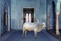 India ☮♥ / by Danielle Sanson ❄