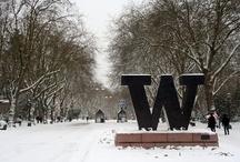 University of Washington  / by Carolyn Tu