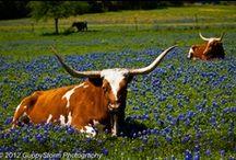 Texas / by Richard Finegan