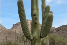 Tucson / Fun things to do in Tucson with kids / by Travel for Kids