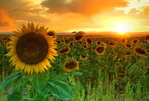Fhotographs Nature-Natuur - Flowers / De allermooiste bloemen / by mieke lobker