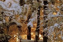 Winter / by Patrick Saltsman