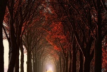 Paths and Roads / by Patrick Saltsman