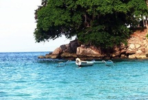 My ISLAND Home <3 / all things Timorese / by GenJen Turtle Leo