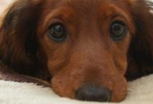 Dog. I'm a puppy dog. / by Catherine Shafer