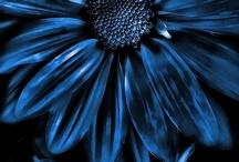 BLUE / by UT Tyler