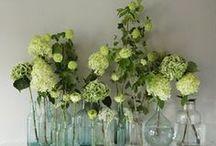 Cut Flowers / by Lisa Acheson  Yoga