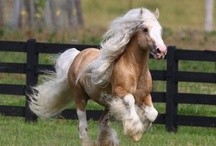 Beautiful Horses / by Carrie ♥