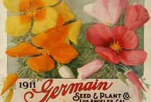 GARDEN Seed Art ♥ / Garden art including vintage seed packets and art made from seeds - favourites chosen for their art, lettering, layout, design, or amusing wording.  / by Melissa @EmpressOfDirt.net  ❤