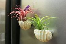 GARDEN Air Plants ♥ / Magical, amazing, mysterious, beautiful air plants! / by Melissa @EmpressOfDirt.net  ❤