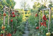 GARDEN Tomatoes ♥ / Everything you need to know to grow heirloom and hybrid tomatoes in any space * indoors or outdoors *  Delicious! / by Melissa @EmpressOfDirt.net  ❤