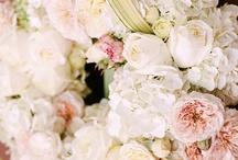 In Bloom / by Kelly Marie Showalter