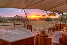 Serengeti Bushtops Camp / Serengeti Bushtops is a 5 star luxury camp located in the north western part of the Serengeti. / by Bushtops Camps