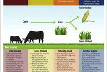 Beef Fun Facts / by Georgia Beef Board