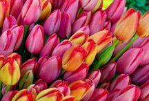 Flowers / by Dot Waterman