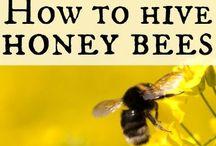 Bee Keeping / by Megan Albertson