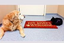 """About Beechmont Pet Hospital / We are a full service veterinary medical facility, located in Southeast Cincinnati, Ohio. We are committed to promoting responsible pet ownership, preventative health care and related educational resources to our clients. Since our founding in 1984, our commitment has been to provide """"Quality Veterinary Care at Affordable Prices."""" / by Beechmont Pet Hospital"""