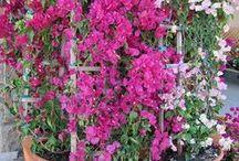 Växter och ute. . . / by adilah wallen