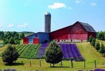 Barns & Farms + / by Dario Vega