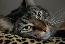 los gatos / kitties lovely kitties / by Deborah