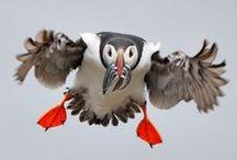 Birds / by Deon Baker