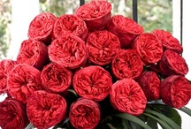 Red Flowers / by WholeBlossoms Wholesale Wedding Flowers