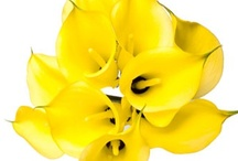 Yellow Wedding Flowers / by WholeBlossoms Wholesale Wedding Flowers