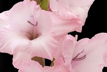 Pink Wedding Flowers / by WholeBlossoms Wholesale Wedding Flowers