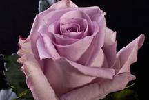 Lavender Flowers / by WholeBlossoms Wholesale Wedding Flowers