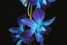 Blue Wedding Flowers / by WholeBlossoms Wholesale Wedding Flowers