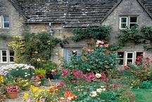 Dream Garden / by Poundland UK