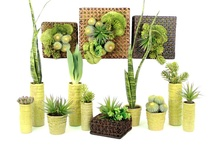 Pure Succulent Collection / For more information on any of our pre-mades, please call 404-351-0000 or send us an email at order@heeney.com. / by Heeney Company
