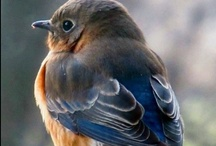 Birdies / by Jane Powers