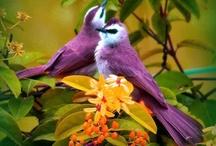 Birds / by Tonya Daisy