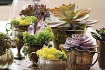 Gardening / Trying to include more plant life in my living spaces... / by Brynn Metheney