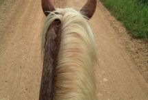 For My Horses / Knowledge that EVERY horse owner should know / by Shayla Fox