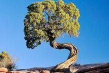 Trees / by San Sabba